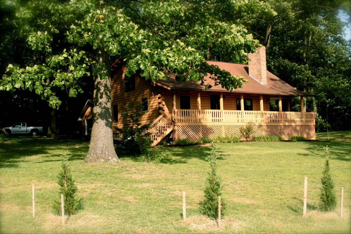 Log cabin under a tree in Tennessee